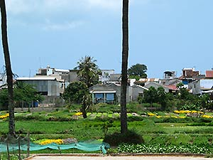 Nha Trang, vegetable- and flowerbeds